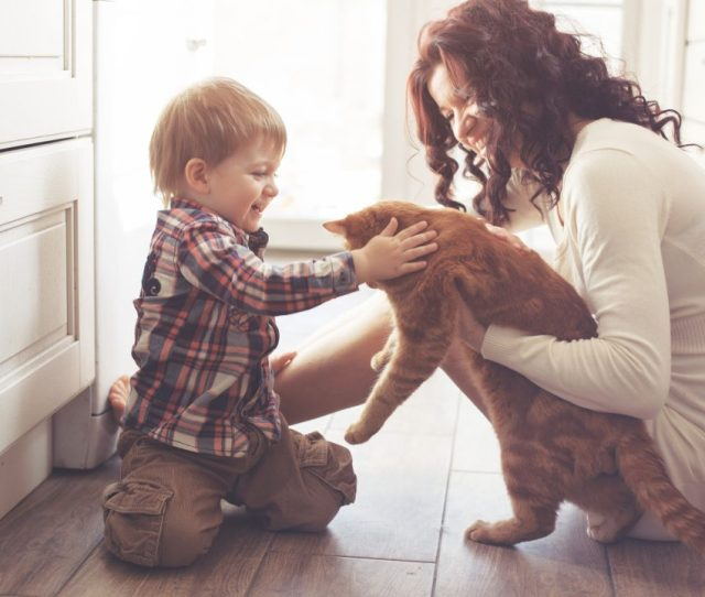 We Love Our Pets After All They Are A Huge Part Of Our Families One Thing We Dont Love The Allergies Caused By Pet Hair And Dander