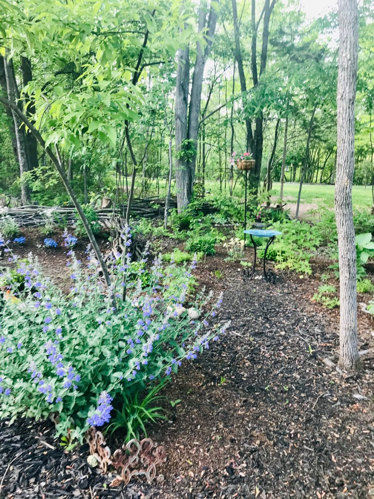 outdoors picture featuring lavender plants, blue water bowel and green trees