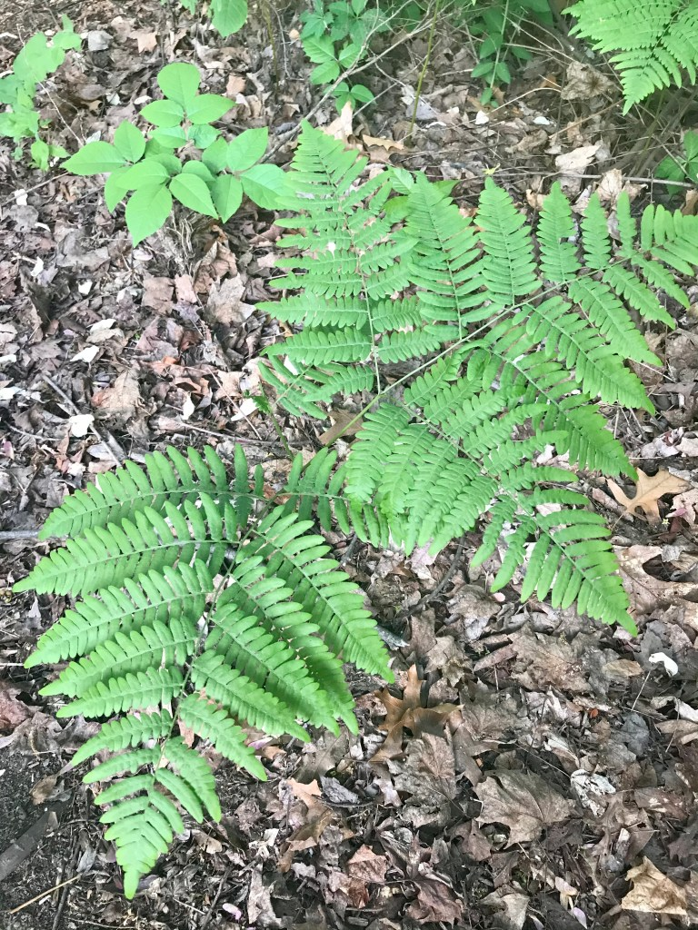 Fern plant with outdoor dried leaves