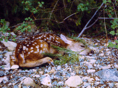 Shhh, sleeping bambi! Credit: Gary Robertson via Flickr