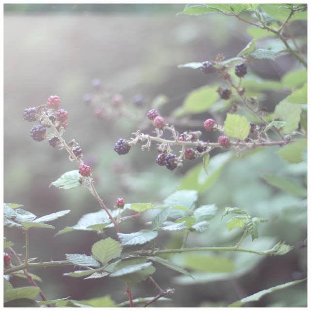 Blackberry picking – Simply HYGGE