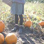 Pumpkin Farm – a visit