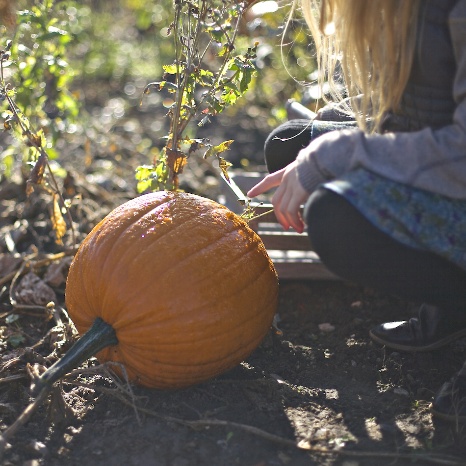 pumpkin-farm-_the_hygge_journal_00-copy