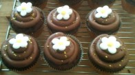 Double chocolate cup cakes with edible daisies