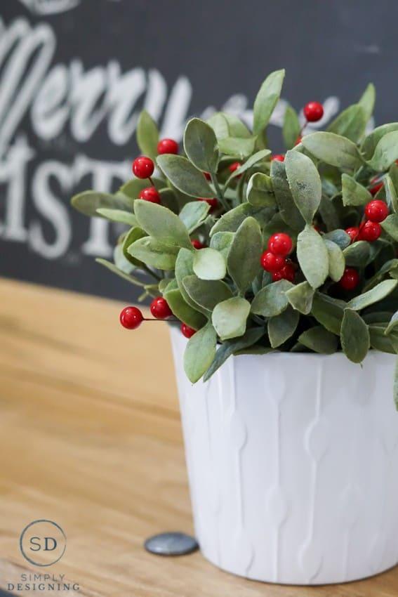 Holiday plant