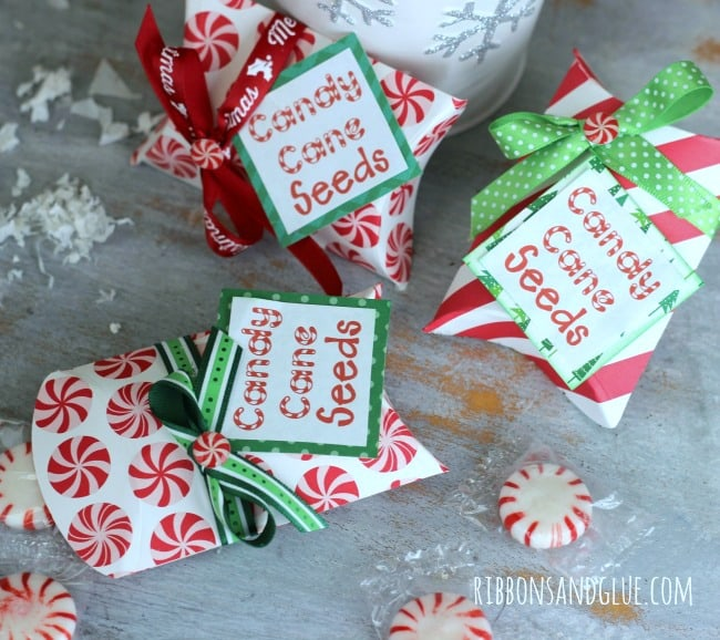 candy-cane-seeds-4