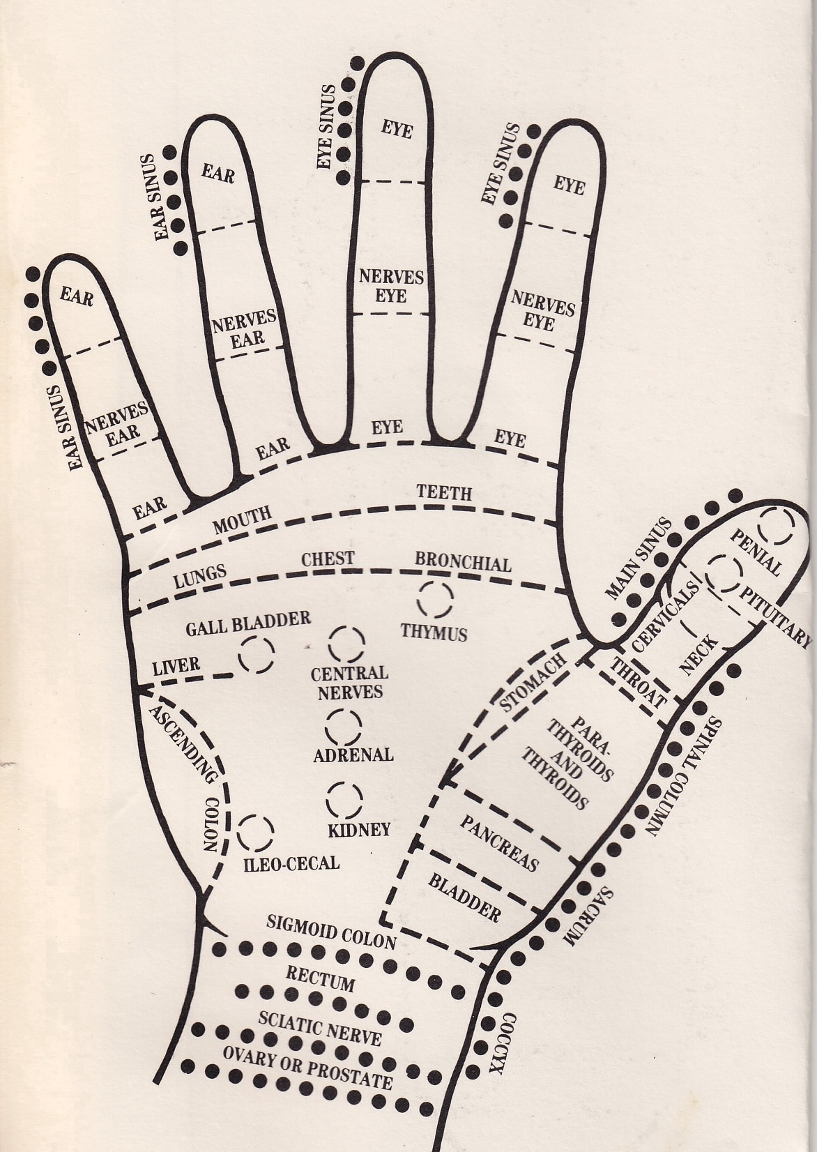 acupressure diagram of pressure points 2016 toyota tundra radio wiring be healthy beautiful  hand lesley voth