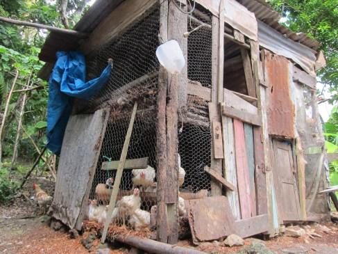 Makeshift Chicken Coop