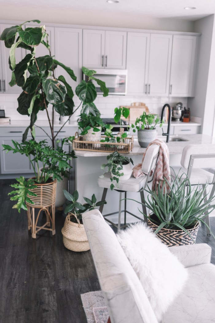 My Plant Oasis | All the Plants in My Home