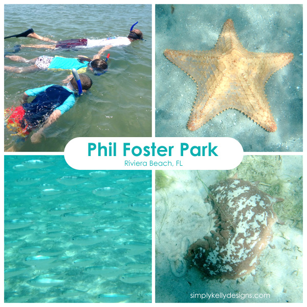 Snorkeling at Phil Foster Park in Riveria Beach, FL - Simly Kelly Designs