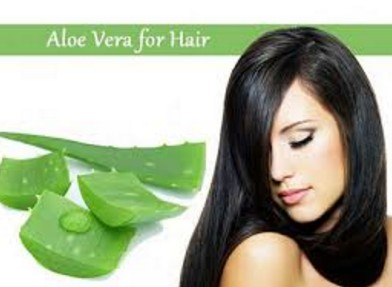 aloe vera for hair