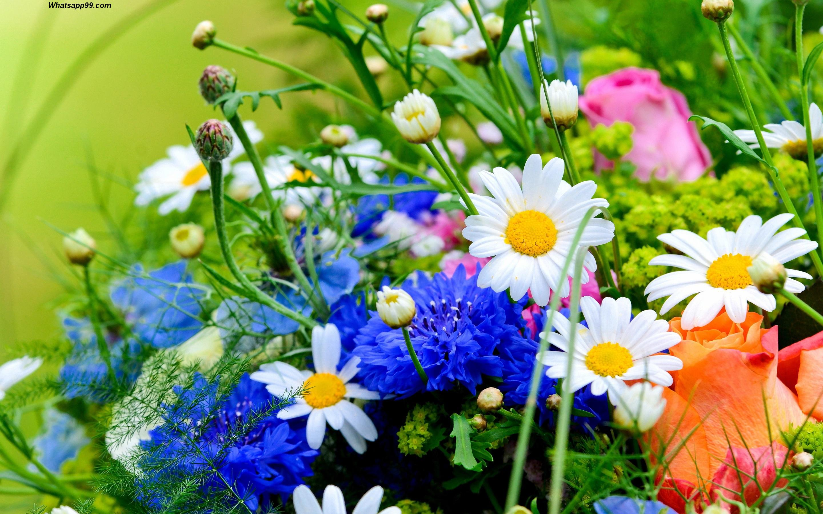 Beautiful Flower HD Wallpaper For Whats app DP