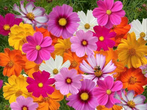 Beautiful colourful flowers wallpapers