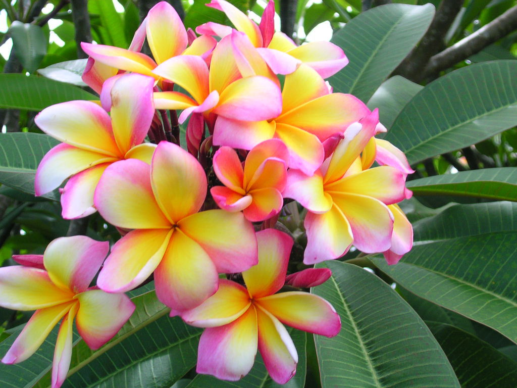 Worlds top 100 beautiful flowers images wallpaper photos free download beautiful colorful flower hd wallpaper image izmirmasajfo Image collections