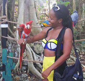 parrot-forearm