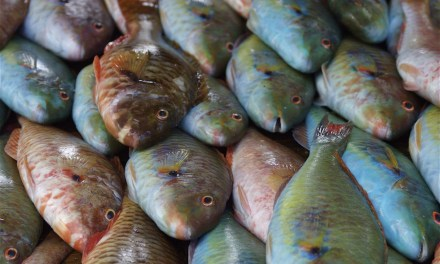 Why You Should STOP Consuming Parrotfish