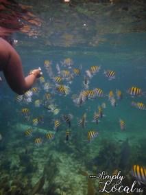 Negril-snorkeling-fish
