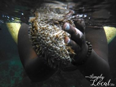 Negril-snorkeling-sea-cucumber