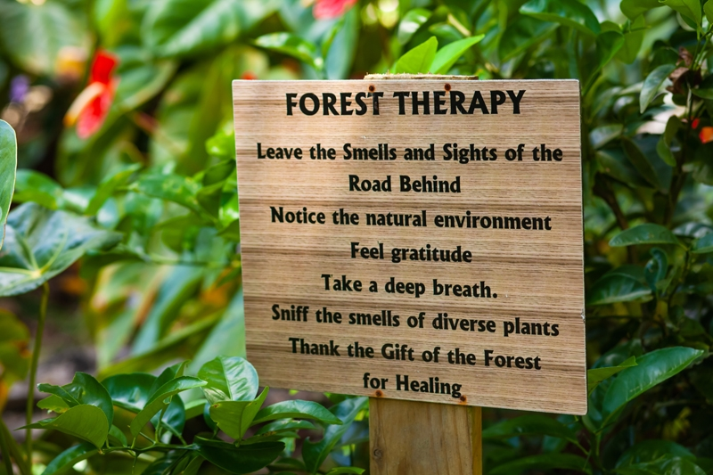 Forest Therapy sign