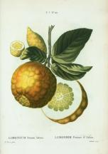 Lemon Art Piece_6