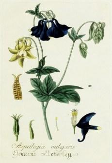 Blue Botanical Image_4