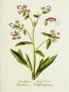 Lavender Botanical_1