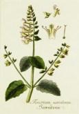 Lavender Botanical_12