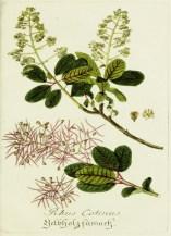 Lavender Botanical_17