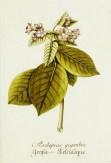 Magental Botanical_1