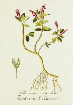Magental Botanical_14