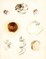 Seashell_11