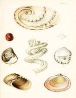 Seashell_12