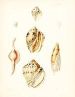 Seashell_25