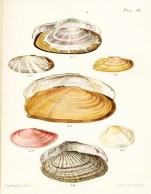 Seashell_36