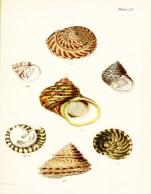 Seashell_5