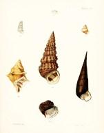 Seashell_7