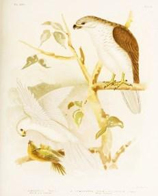 Birds of Australia_1