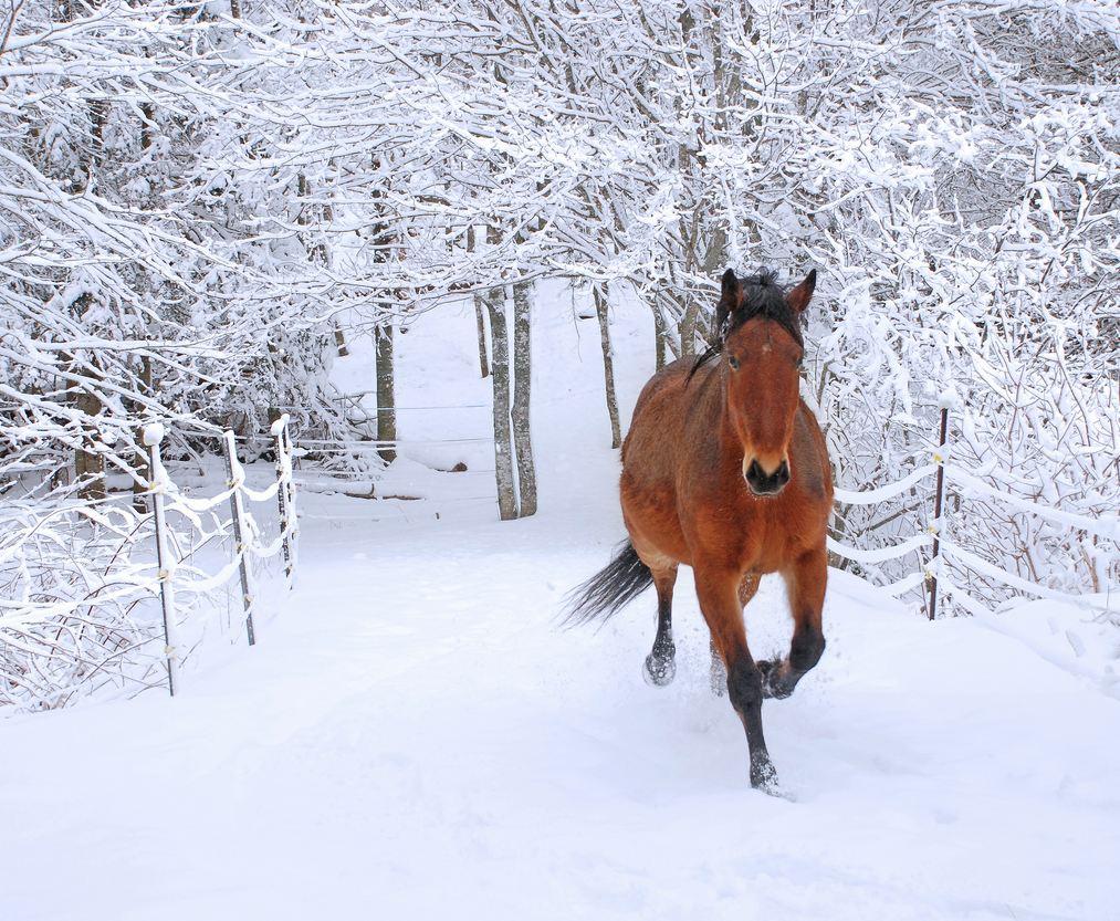 Winter Scene Simply Marvelous Horse World