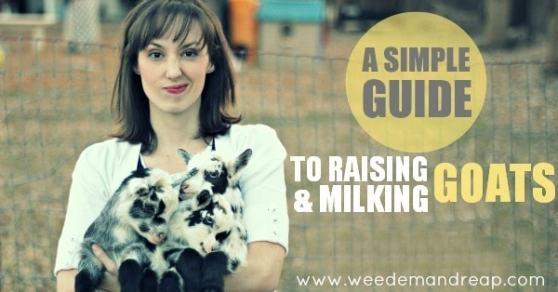 how-to-milk-goat-FB-ready