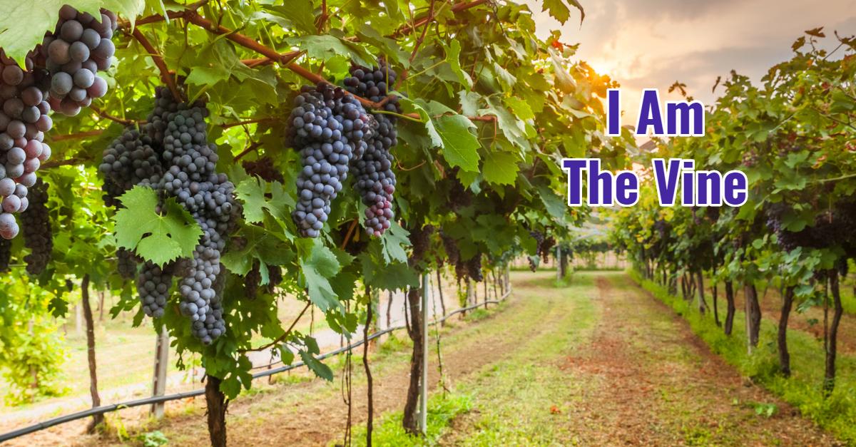 I Am The Vine Simply Said Devotions