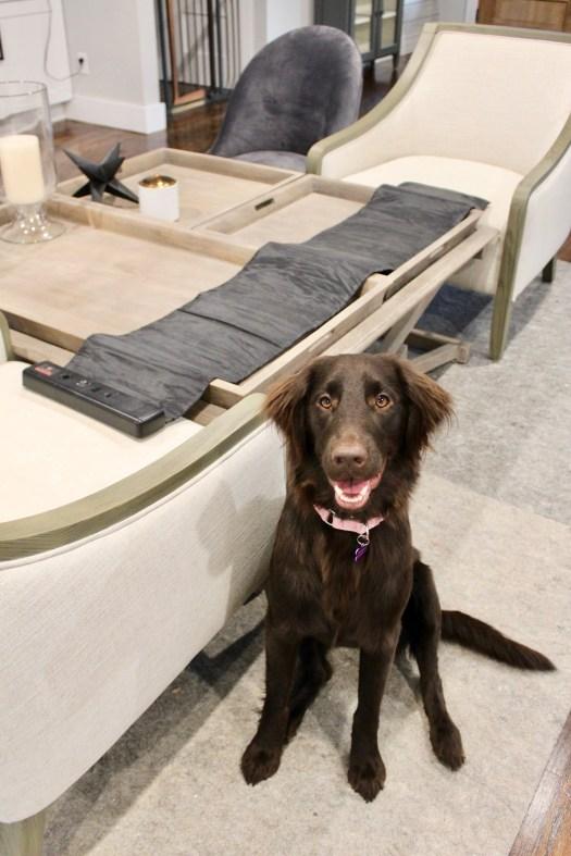 dog furniture protection