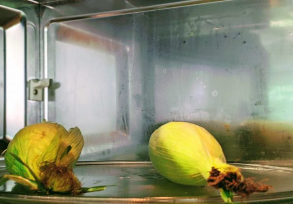 Steam on the walls of the microwave is one indication the corn is cooked