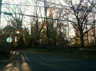 Eerie Treebranches
