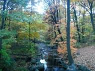 Brook in Autumn
