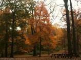 Bright Orange Tree