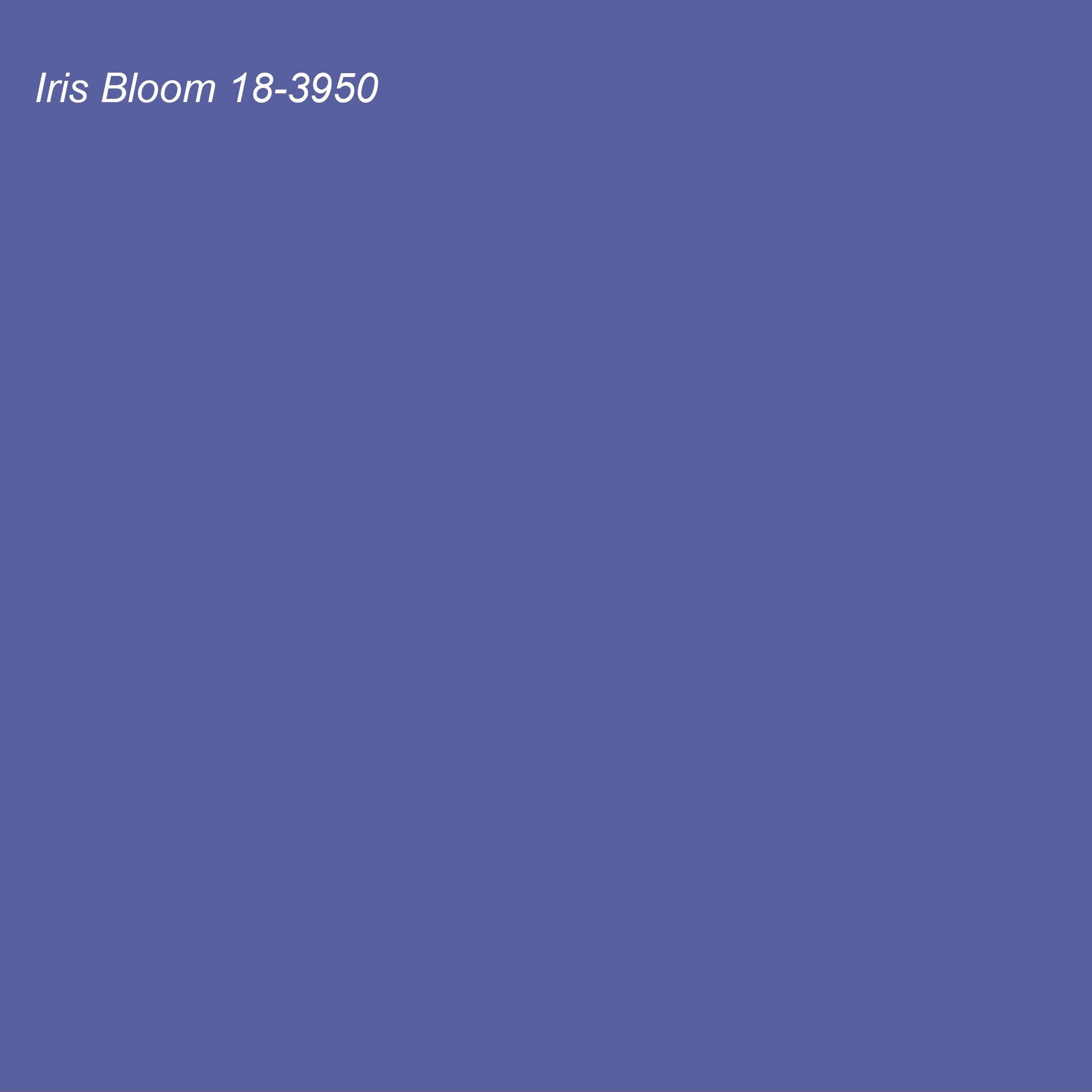 Pantone 2021 Color of the Year Suggested Accent Shade Iris Bloom 18-3950