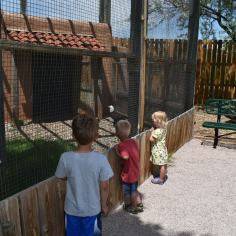 Reptile Gardens also has birds and prairie dogs. Here our kids are looking at a bald eagle.