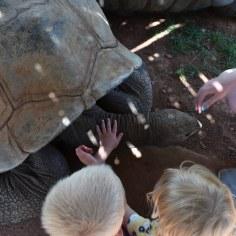 Tank the giant tortoise.