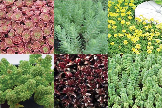 Indoor Garden Plants