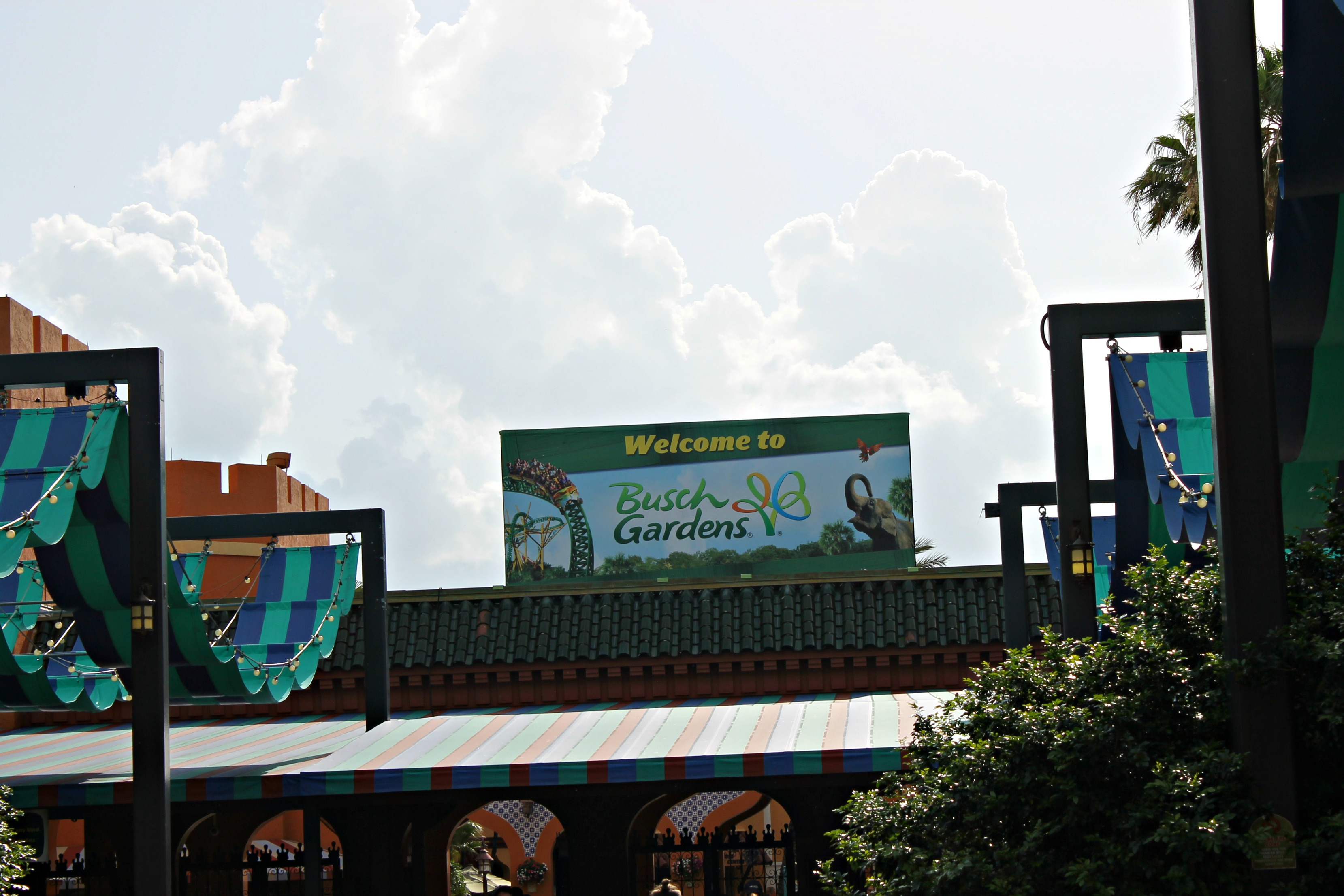 Best Busch Gardens Tampa Bay Experiences For Kids Simply Today Life